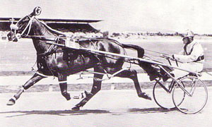 anthony barrier le trot